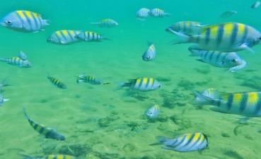 Mergulho c/ Snorkel