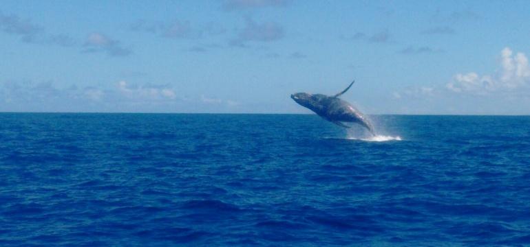 14º saída de Observação de Baleias - Praia do Forte