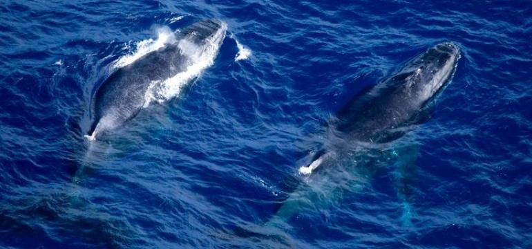Comportamentos Baleias Jubarte
