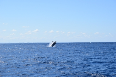 Observação de Baleias - Passeio 14.8.2016
