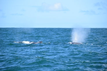 Observação de Baleias - Passeio 6.8.2016