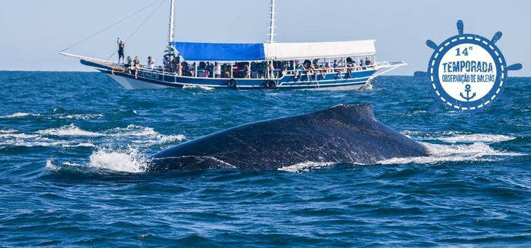 14ª Temporada de Observação de Baleias
