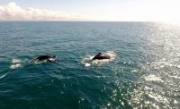Observação de Baleias // Whale Watching